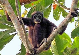 Tree-dwelling mammal